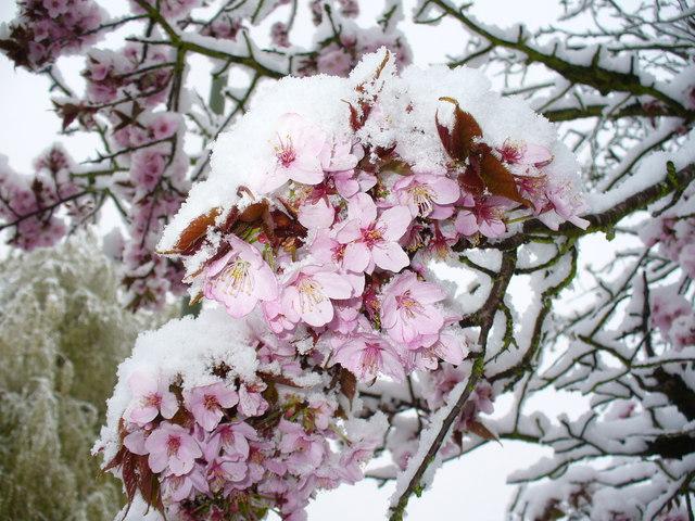 motherfunk #29 – Final Call For Springtime